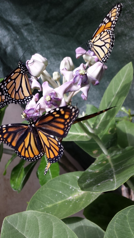 My Butterfly  house