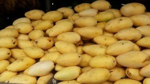 Guimaras Mangos......