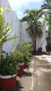 Bahia Norte, front yard garden.