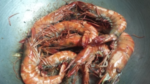 Forget Hawaii !!This is one of the reason why I come back to Roxas city....succulent, sweet and cheap gigantic prawns:-)